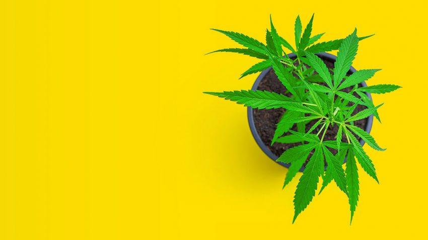 Orange Park Medical Cannabis Dispensary